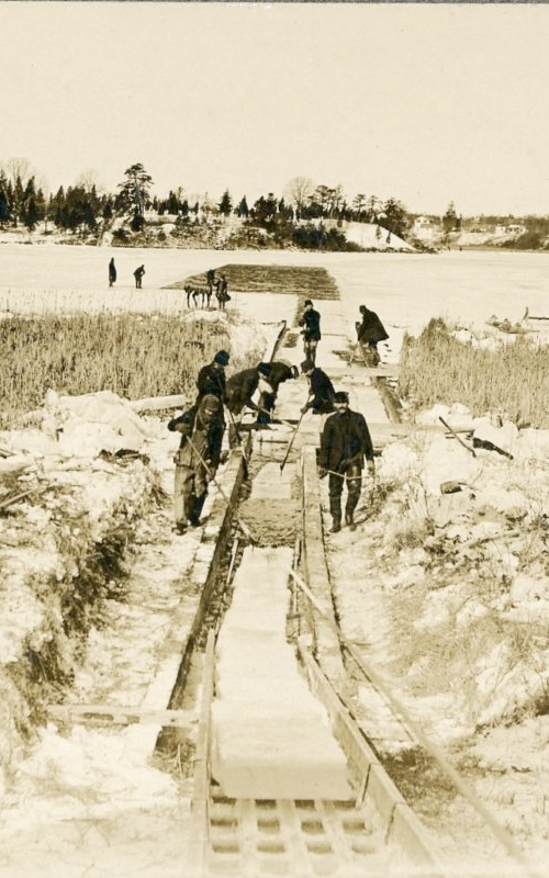 <h3>Ice Cutting, East Marion</h3> <br> <p><i>Photographer unknown</i></p> <strong>Ca. 1900</strong> <br> <br> <p>Most of East Marion Lake is shown here with a number of men at work. This fresh water lake is very close to Peconic Bay, protected only by a narrow strip of beach.  When the blocks of ice were cut they were dragged along a narrow channel to the ice houses.</p>