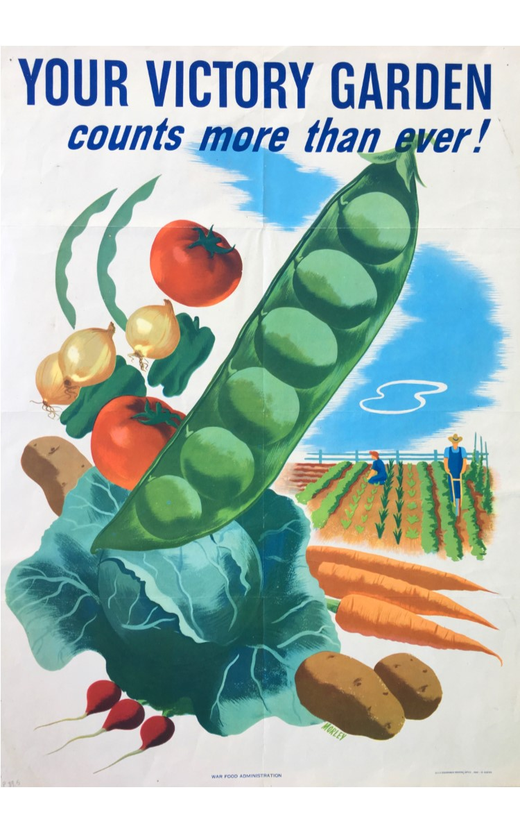 "<h3>YOUR VICTORY GARDEN COUNTS NOW MORE THAN EVER</h3> <br> <p><strong>Morley</strong></p> <p><strong>1945</strong></p> <p><strong>U.S. Government Printing Office</strong></p> <br> <p>This colorful poster made for the War Food Administration (WFA) was one of many created to support and encourage the idea of Victory Gardens – also referred to as ""Liberty Gardens"" or ""War Gardens."" Home-grown vegetables were an enormously important part of the war effort on the home front as they freed up farmed produce for the troops. How-to brochures were produced by the Department of Agriculture and people responded in astonishing numbers. Evidently about 20 million such gardens were planted – producing some 40 per cent of all vegetables grown in the U.S.</p> <br> </p>This appealing poster dates from 1945 – late in the war effort – but virtually nothing is known about the artist. There is a signature ""Morley"" and it has been suggested this might refer to an artist named Hubert Morley - but little is known about him and the evidence is thin.</p>"