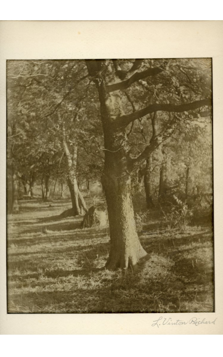 <h3><em>Woodland Sunshine</em></h3> <br> <p><strong>L. Vinton Richard</strong></p> <p><strong>Ca. 1915</strong></p> <br> <p>This photograph was printed, matted, and signed on the mat by Richard – most likely in preparation for an exhibition. It is one of very few early photographs by Richard that is printed in sepia tones, and the only one in the collection with a visible signature.</p>