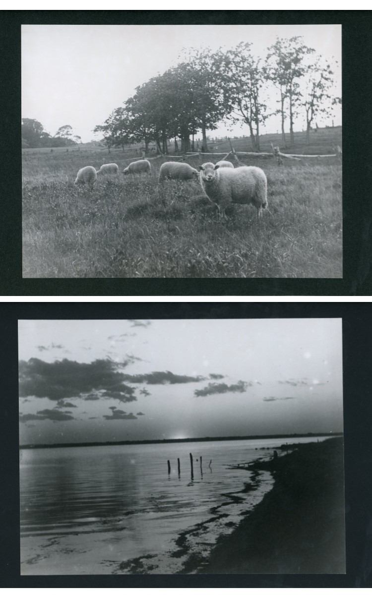 <h3><em>The Sheep Meadow Above Young's Road, Orient</em></em></h3> <br> <p><strong>L. Vinton Richard</strong></p> <p><strong>1913</strong></p> <br> <p>The meadow and sheep were owned by Charles L. Young. The photograph was taken on October 13, 1913.</p> <br> <br> <hr> <br> <br> <h3><em>Day's End, Orient</em></h3> <br> <p><strong>L. Vinton Richard</strong></p> <p><strong>1914</strong></p> <br> <p>This view from along the shore near Major's Pond depicts the sunset afterglow, looking across Orient harbor toward the causeway.</p>