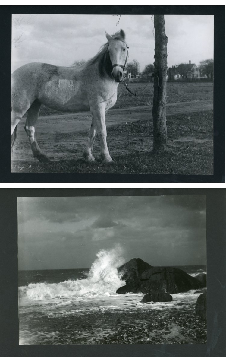 """<h3><em>Nellie the Horse</em></h3> <br> <p><strong>L. Vinton Richard</strong></p> <p><strong>Ca. 1915</strong></p> <br> <p>Nellie belonged to the photographer's father, Henry H. Richard.</p> <br> <br> <hr> <br> <br> <h3><em>A Dashing Wave</em></h3> <br> <p><strong>L. Vinton Richard</strong></p> <p><strong>1913</strong></p> <br> <p>Taken in October 1913, this photograph was published in <em>Popular Photography</em> magazine in February 1914. The review in that magazine noted that """"Orient, New York, is the home of that authority on the photography of surf, William Steeple Davis…."""" The article goes on to suggest that """"Mr. Richard, who, if not a pupil of Mr. Davis's, has at least worked along similar lines and profited by his articles in <em>American Photography</em>."""" In fact, Richard did learn much about photography from his good friend William Steeple Davis who was six years his senior, and they frequently focused on the same subjects depicting the natural beauty of the East End. This photograph was also titled <em>Rocks at Sound Shore</em>. L.</p>"""
