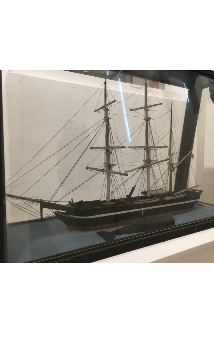 """<h3>MODEL OF THE BARK <em>FRANKLIN</em></h3> <br> <p><strong>Made by William T. Conklin</strong></p> <p><strong>Ca. 1888</strong></p> <br> <p>The Franklin was a whaler based in Sag Harbor and played an important part in the career of Captain Edwin P. Brown, Orient's only whaling captain. In 1833, when he was just twenty years old, Brown signed on to sail in the Franklin on his first whaling voyage. She was bound for New Zealand and sperm whaling. The vessel is shown here with her crew """"cutting in"""" a whale. The carcass was brought alongside the ship and a cutting stage lowered out over it. From the cutting stage, the crew cut strips of blubber which was hoisted aboard, cut into pieces and then boiled in whale oil. The boiling or """"trying out"""" process produced oil which was drawn off and stored in casks below deck. When the whaler had filled her casks, she headed for home. Captain Brown sailed on the Franklin again in 1837 as second mate.</p> <br> </p>The model was made by William T. Conklin, a man of many talents. He was a clockmaker who made the original clock on Orient's Methodist Church, a painter whose self-portrait and ship portraits hang in Webb House, and a builder of models, two of which are on view in this gallery.</p>"""